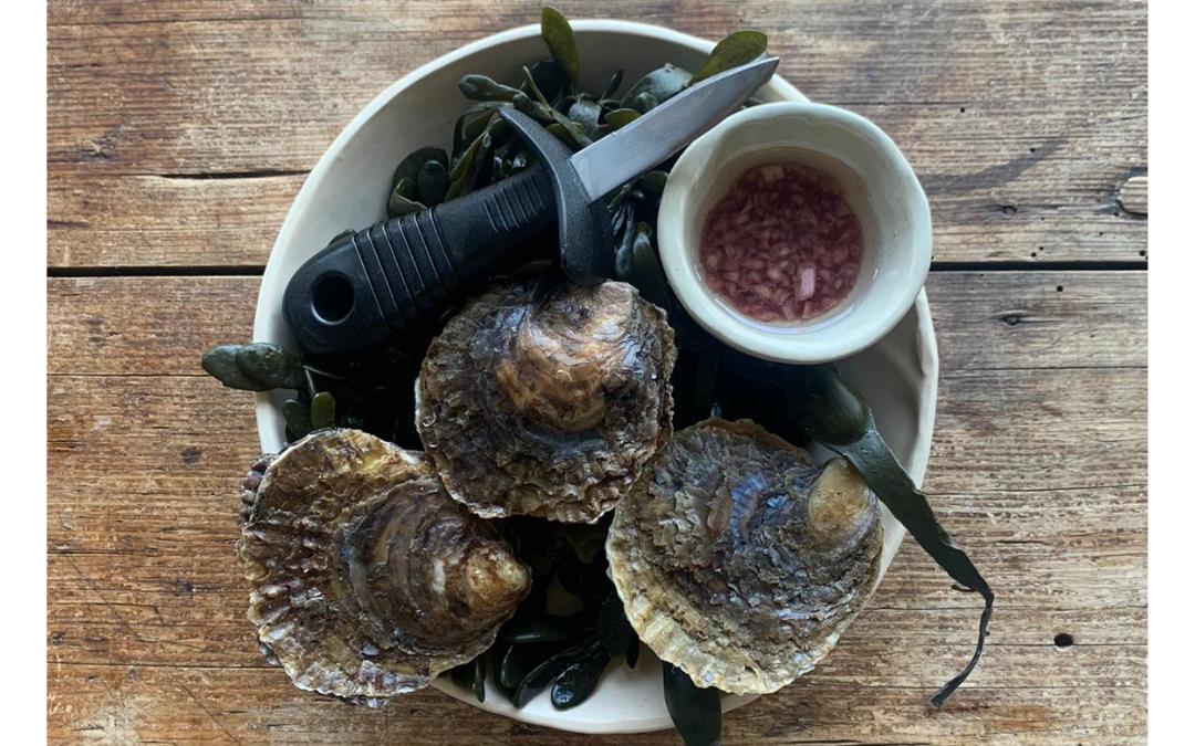 Hoe maak je zelf oesters open?